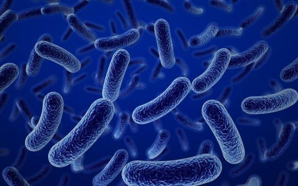Men vi sinh Bacillus clausii
