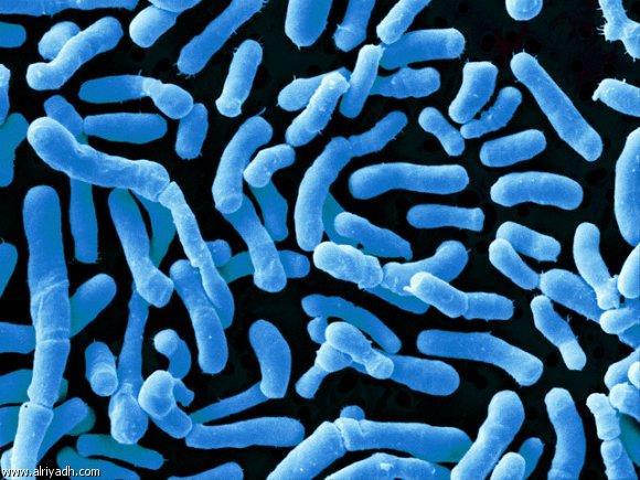 Men vi sinh Lactobacillus acidophilus